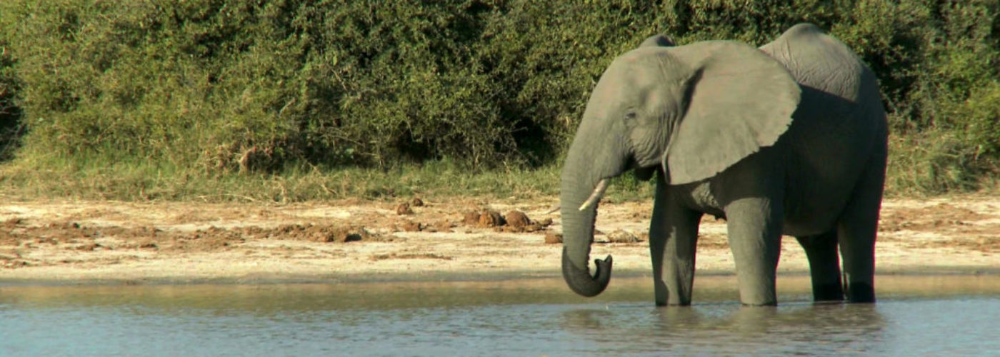 ensam elefant