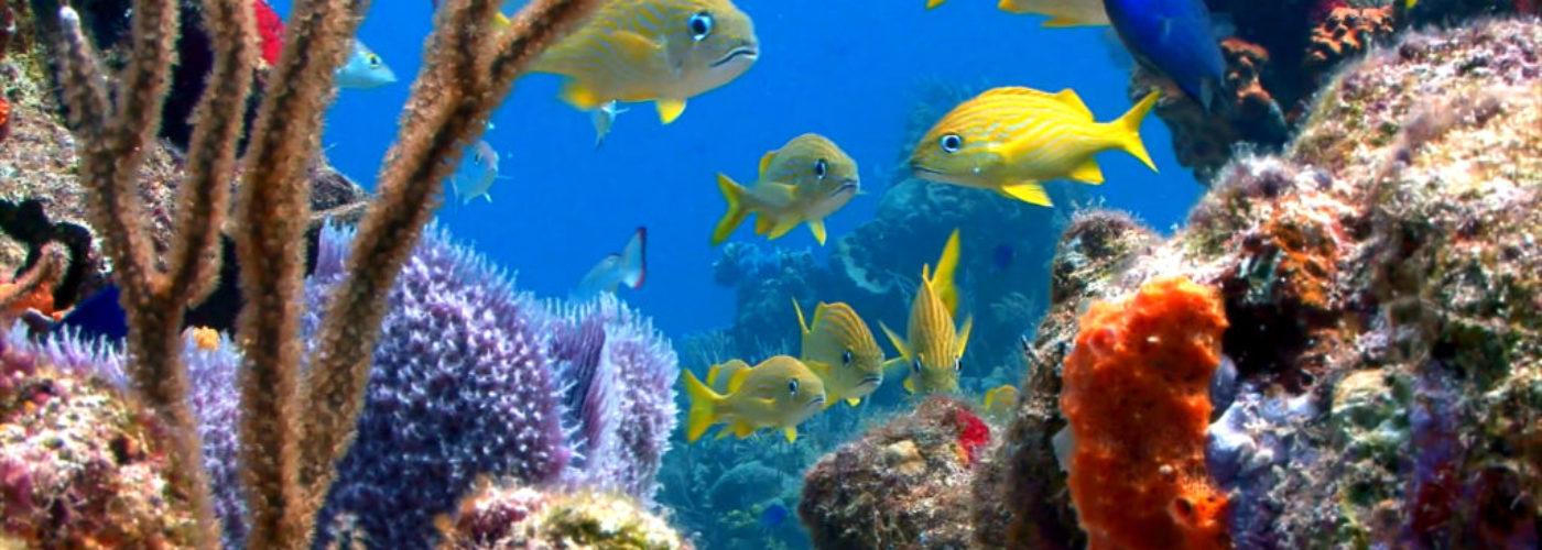 POD – Våra hav mår inte bra