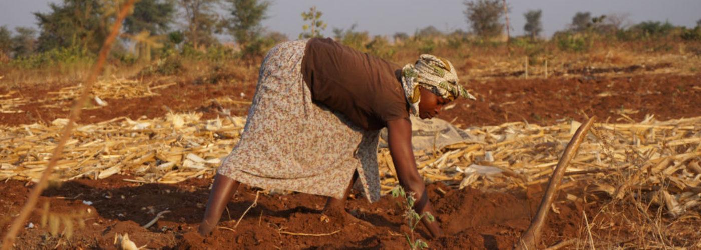 POD – Jämställdhet är en förutsättning för att nå klimatmålen