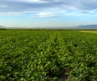 En tredjedel av all mat som produceras slängs – helt i onödan
