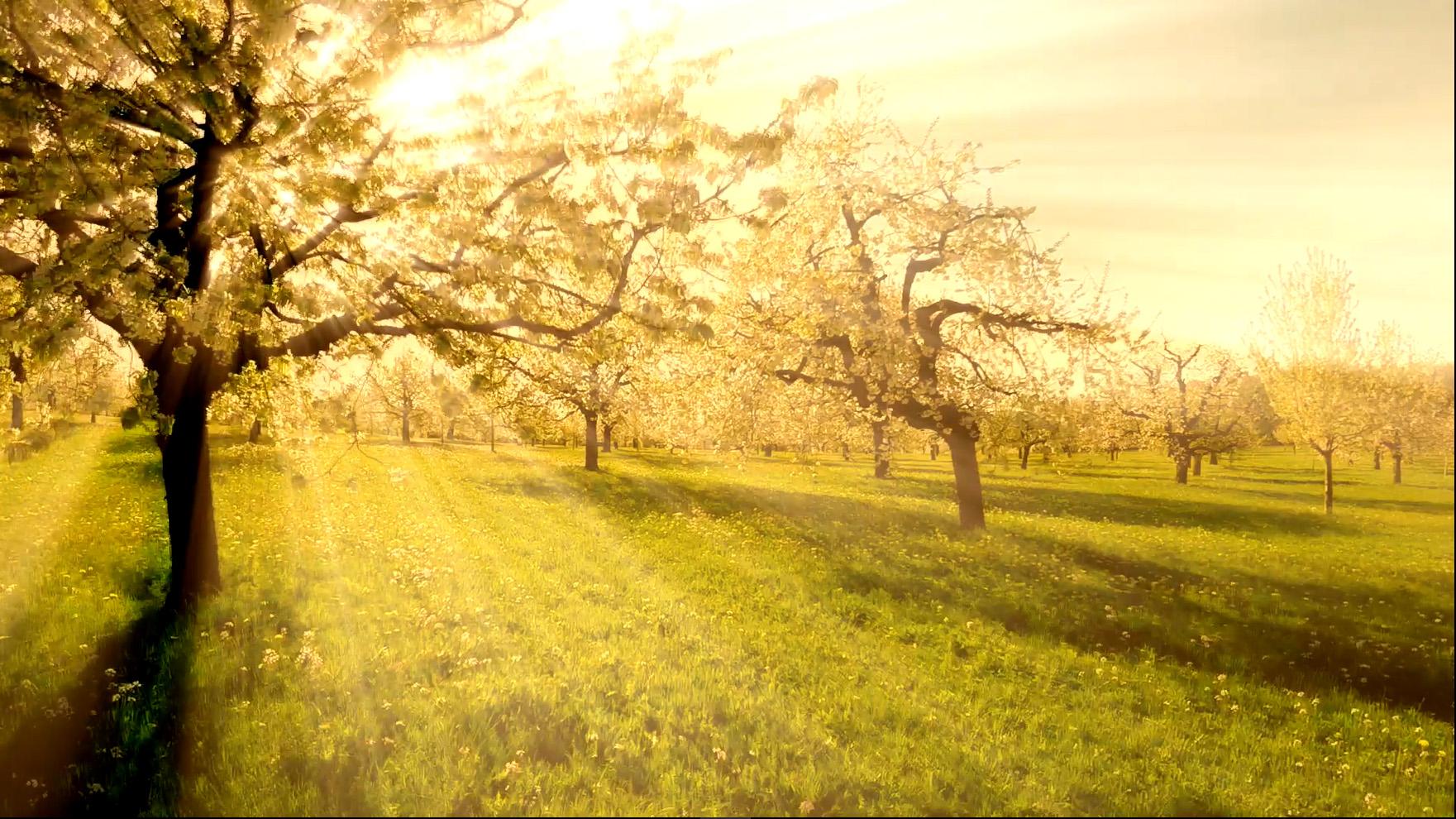 POD – Miljöetik – Det behövs en etisk reflektion i hela samhället om vi ska nå klimatmålen – Olle Torpman