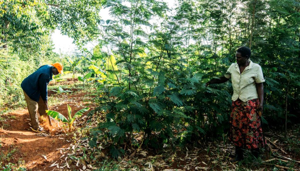 Agroforestry till hemsidan